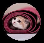 cat in a rug