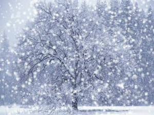 Lessons from a snowstorm